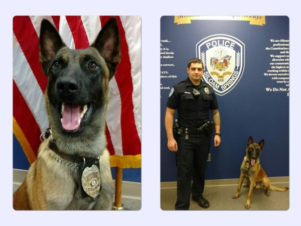 Frenkie - SSPD&#39s K9 Officer