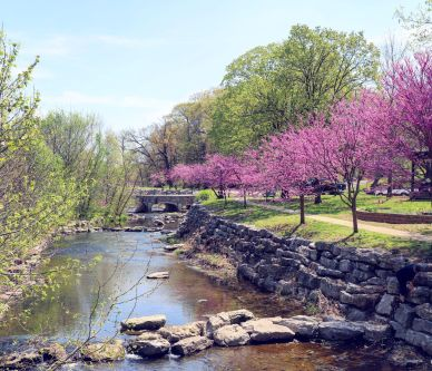 Sager Creek lined with purple trees by Parks and Rec building